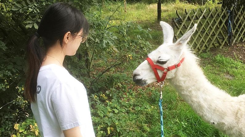 Studentin schaut einem weißem Lama in die Augen.